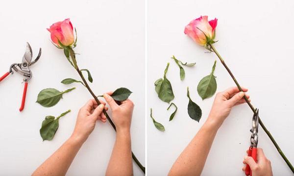 Hoa hồng là một sự lựa chọn hoàn hảo tôn vinh vẻ đẹp trong căn phòng của bạn