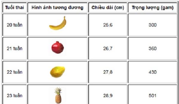 Bảng chiều cao, cân nặng của bé giai đoạn 20 - 23 tuần tuổi