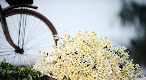 Hoa thạch thảo mang nhiều ý nghĩa khác nhau tùy vào hoàn cảnh và màu sắc của hoa