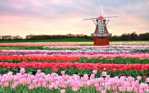 Ý nghĩa của các loài hoa còn được bắt nguồn từ các sự tích
