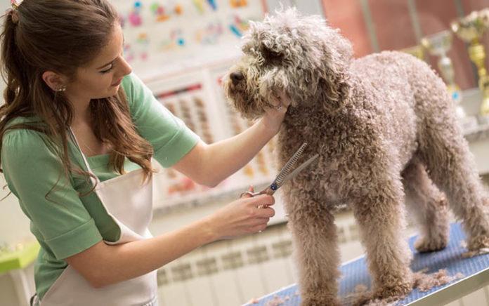 Chi phí mở cửa hàng thú cưng