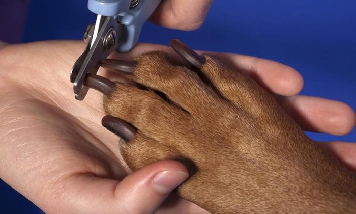 kỹ thuật chăm sóc thú cưng