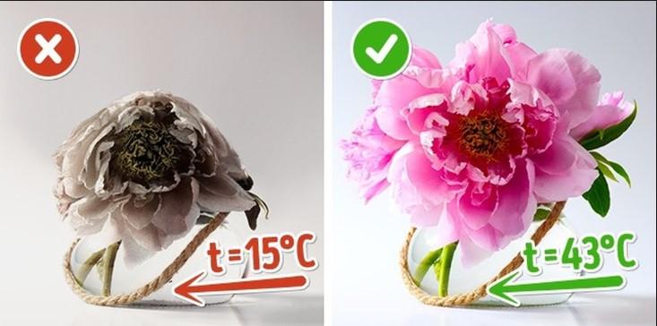Cách cắm hoa tươi lâu hơn
