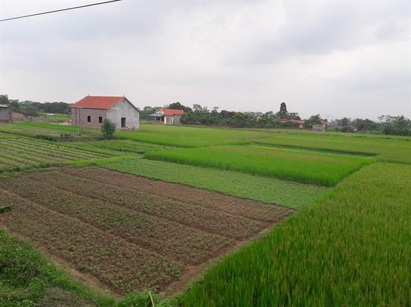 kinh nghiệm mua đất ở nông thôn