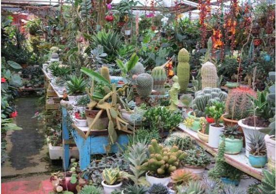 Vườn cây cảnh mini đa dạng cho mọi loại đối tượng