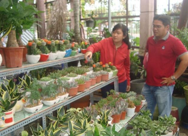 Các nhà vườn là nơi tìm kiếm nguồn hàng kinh doanh cây cảnh thích hợp với giá tốt nhất