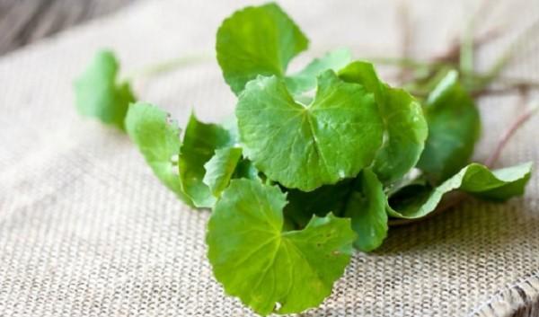 Mặt nạ rau má chứa rất nhiều dưỡng chất giúp bạn chăm sóc da hiệu quả