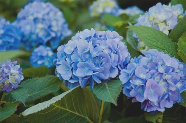 Người mệnh Thủy nên chọn những loại cây có màu xanh dương