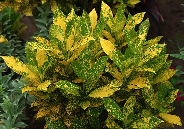 Người mệnh Thổ nên trồng những loại cây màu vàng