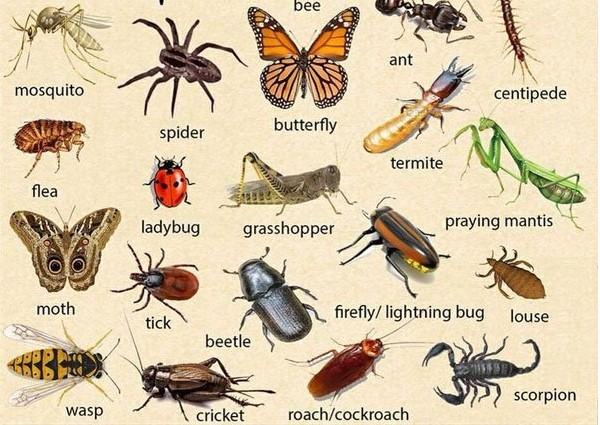 Tên các loại côn trùng bằng tiếng Anh