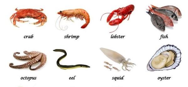 Tên động vật dưới nước bằng tiếng Anh