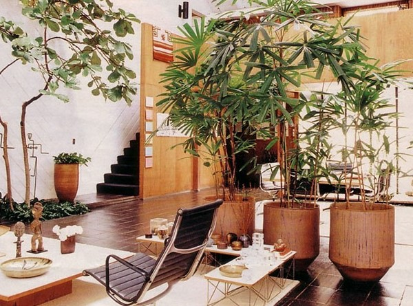 Không nên trồng quá nhiều cây xanh trong phòng khách