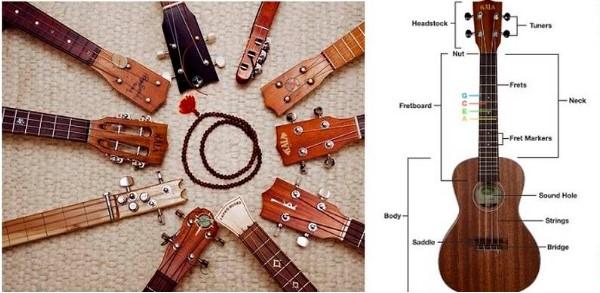 Cấu tạo của cây đàn ukulele