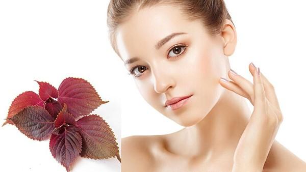 Bạn cần biết da của bạn có phù hợp với lá tía tô hay không?